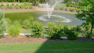 Garden view ornamental grass around the pond for Ornamental fish pond maintenance