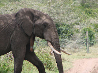 elephant in nairobi kenya