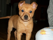 rubi adopted 2/23/2010
