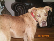 Danica Adopted!