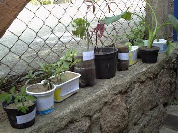 Plantas da turma