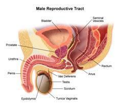 Cara hidup sihat,jauhi barah prostat