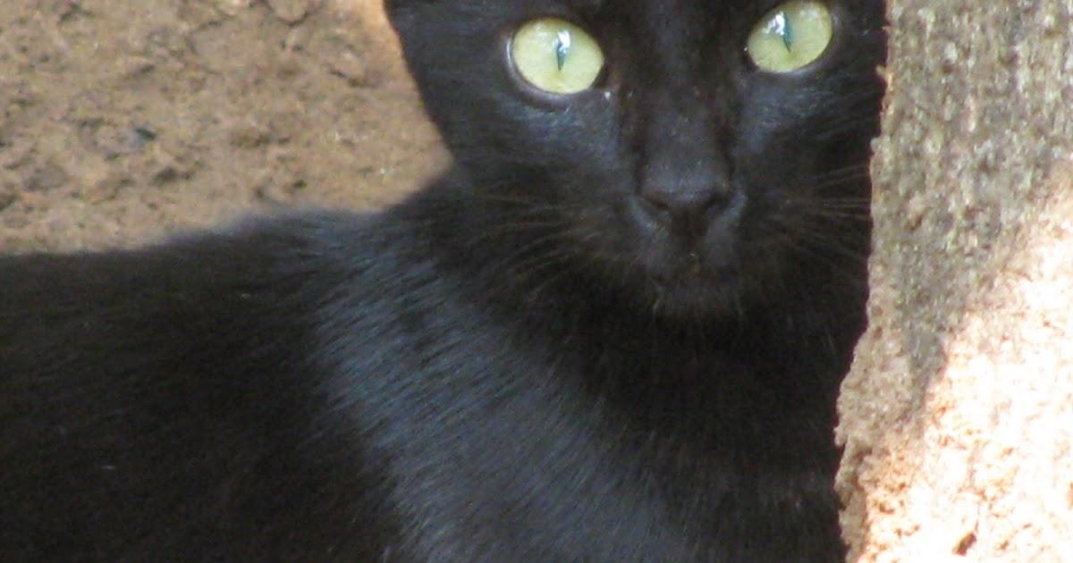 Black Cat Commando Recruitment