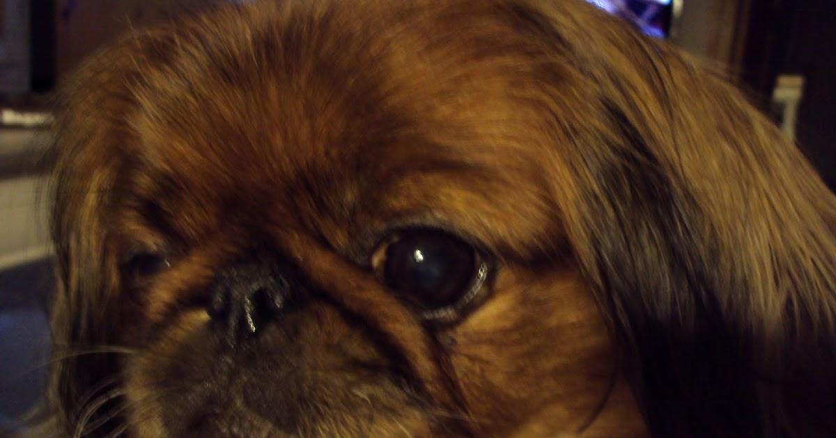 mig eller hunden blødning ved ægløsning