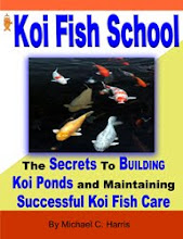 The Ultimate Koi Fish Guide!