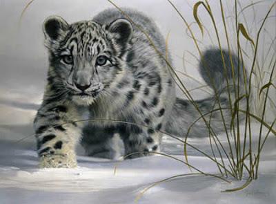 montura de the king : lion Snow_leopard