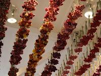 Сухите цветя  Dry_flower12