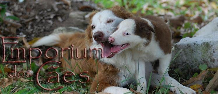 Emporium dos Cães