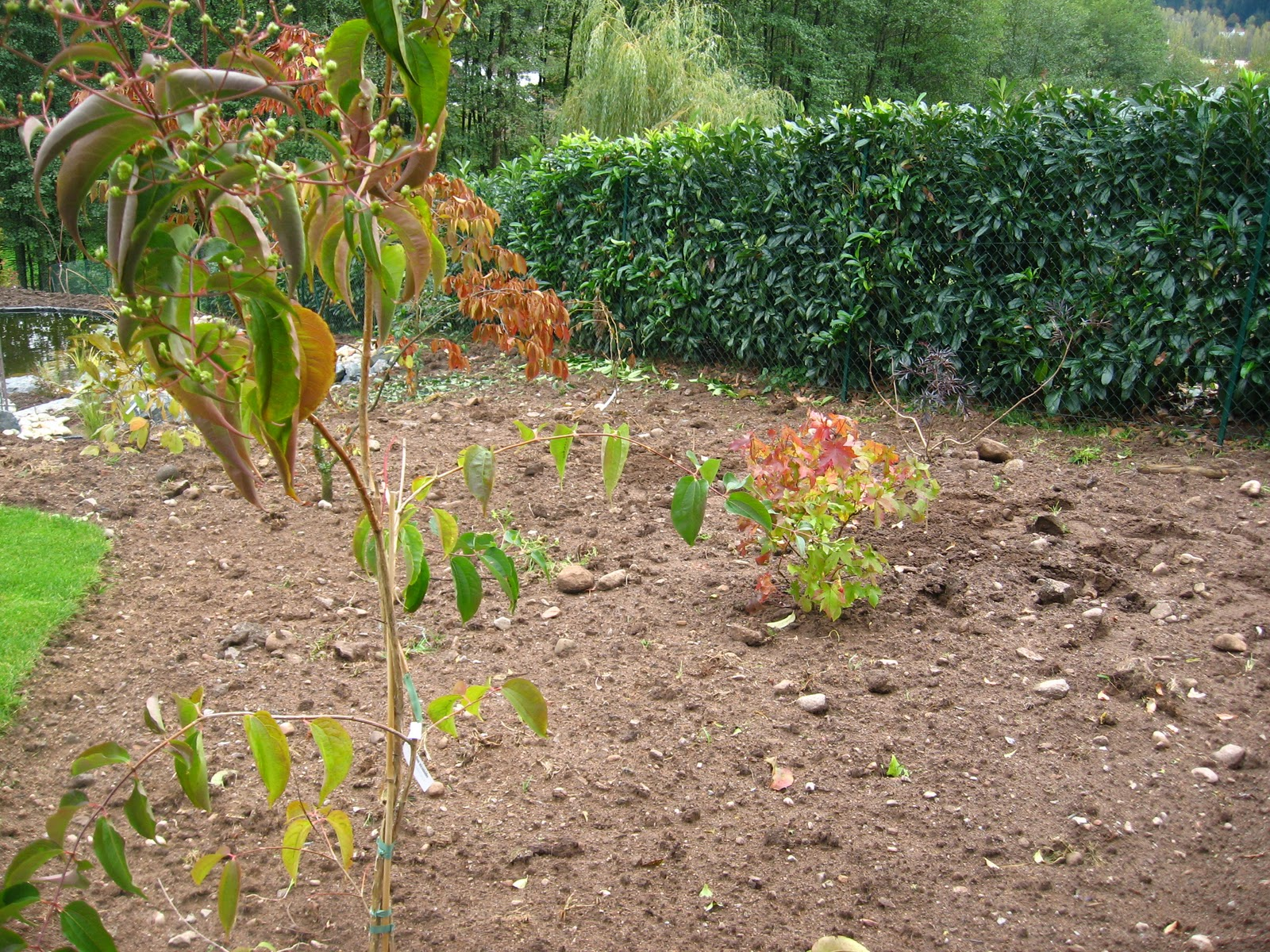 Le jardin du bois des dames semaine plantation for Plantations jardin