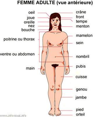 FemmeAdulteVueAnt.JPG