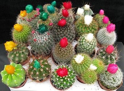 Cactus cupcakes flower