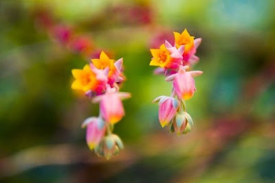 Beautiful small pink and orange flowers