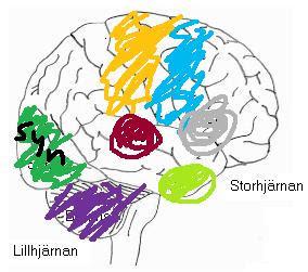 centra i hjärnan