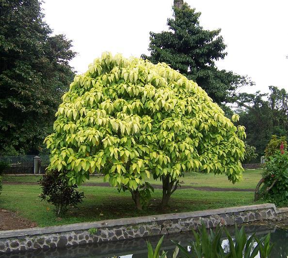 Pohon yang taknya bisa jadi tempat berteduh kalo ujan