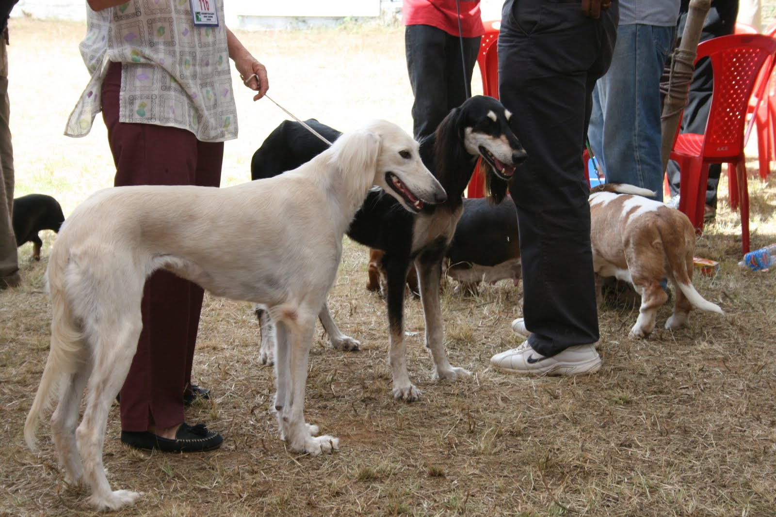 Ooty Dog Show  Date