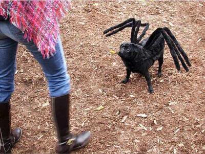 funny pictures of dogs in costumes. Spider and Little Miss Muffet?
