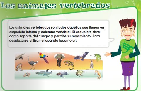 Álbum de vertebrados e invertebrados - Imagui