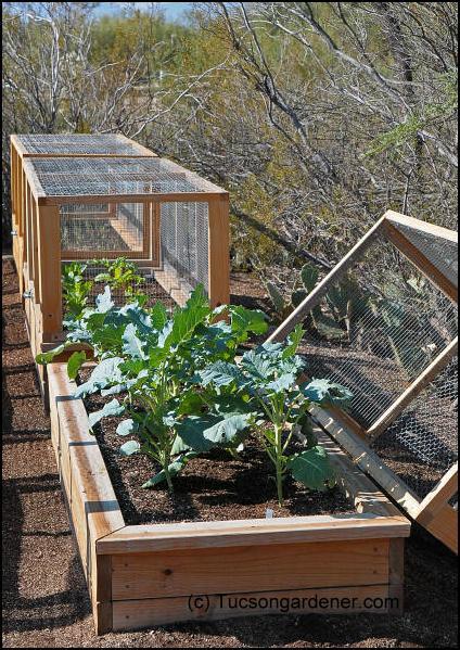 First a dream the garden - Garden ideas to keep animals out ...