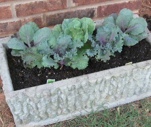 First A Dream: Kale - Decorative and Edible + Garden Party