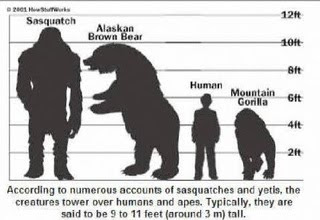 Cryptozoology is to study about Bigfoot and such Mystry