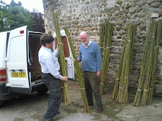 Loading Willow