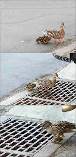 bye bye ducklings
