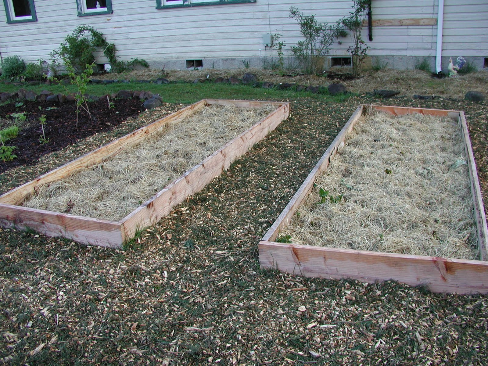 I Mulched The Area All Around The Raised Potato Beds And Raspberries, And  Made A Path Around The Edge Of The Garden Beds I Had Created All Around The  House ...