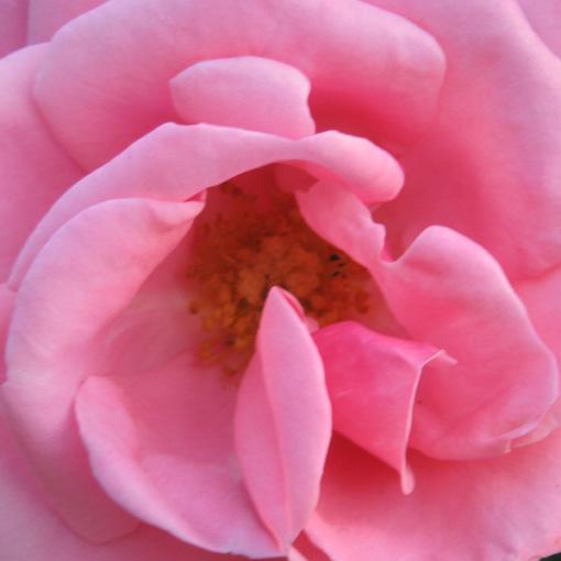[13_09_07+rose+betty]
