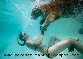 http://2.bp.blogspot.com/_uvGh2J6euuA/THPadI-gIKI/AAAAAAAAADw/W2v1jC81HPs/s1600/macan+2.JPG