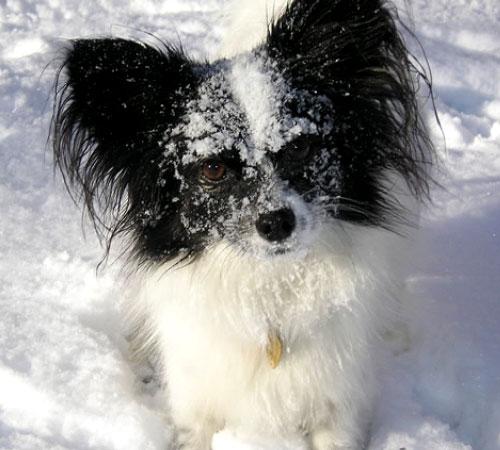 Cane preso a pallate di neve