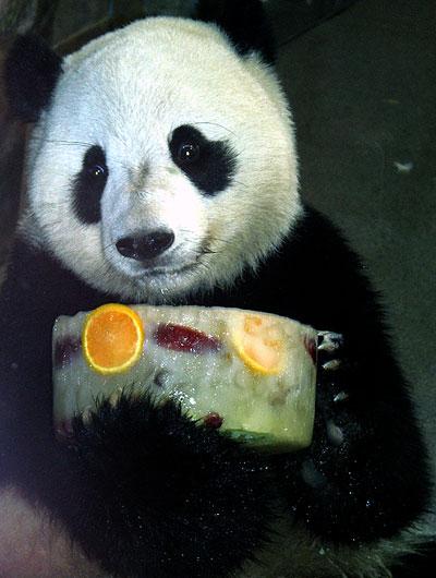 Panda che non credeva che glielo preparassero per davvero
