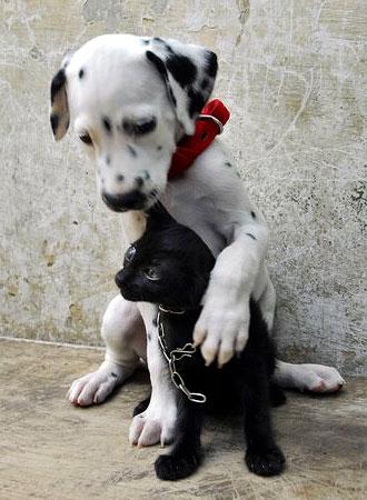 Cane che tranquillizza il gatto mentre aspettano il veterinario