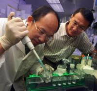 Dr. Lin Mei (right) and postdoctoral fellow Shiwen Luo. Credit: Phil Jones.