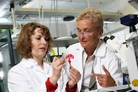 Dr. Johanna Schanz and Prof. Heike Mertsching (f.l.t.r.) work to develop an artificial liver. Credit: Fraunhofer/Dirk Mahler.