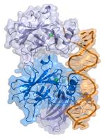 Tumour suppressor p53.