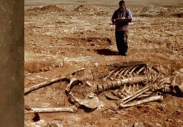 Giant Human Skeleton