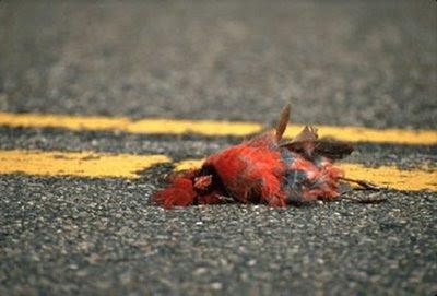 Week 2 - Picks and Standings Cardinal+dead