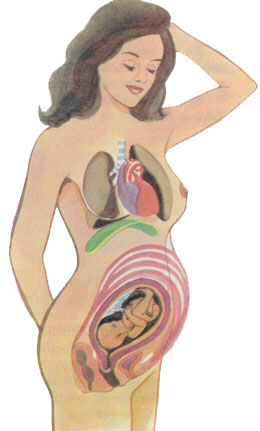 el embarazo en una mujer: