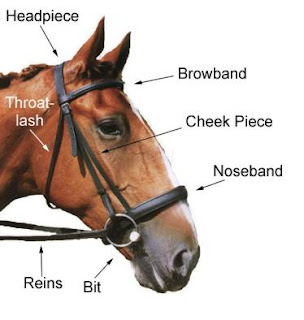 Labeled bridle diagram search for wiring diagrams how to care for horses equipment foir riding rh howtocareforhorses blogspot com 4 h bridle diagram english bridle parts diagram ccuart Choice Image