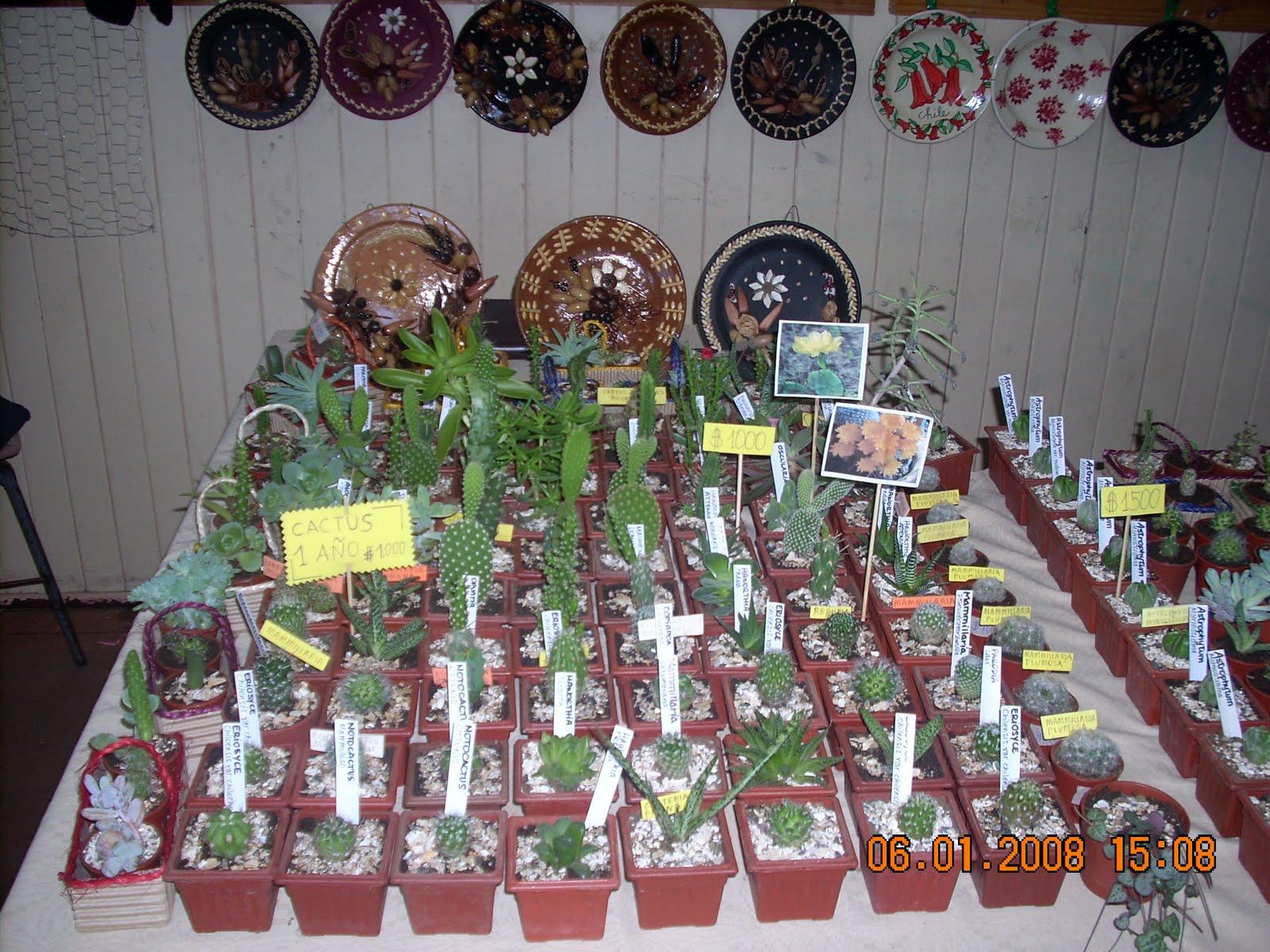 Vivero sanssouci productos del vivero sanssouci cactus y for Vivero de plantas exoticas