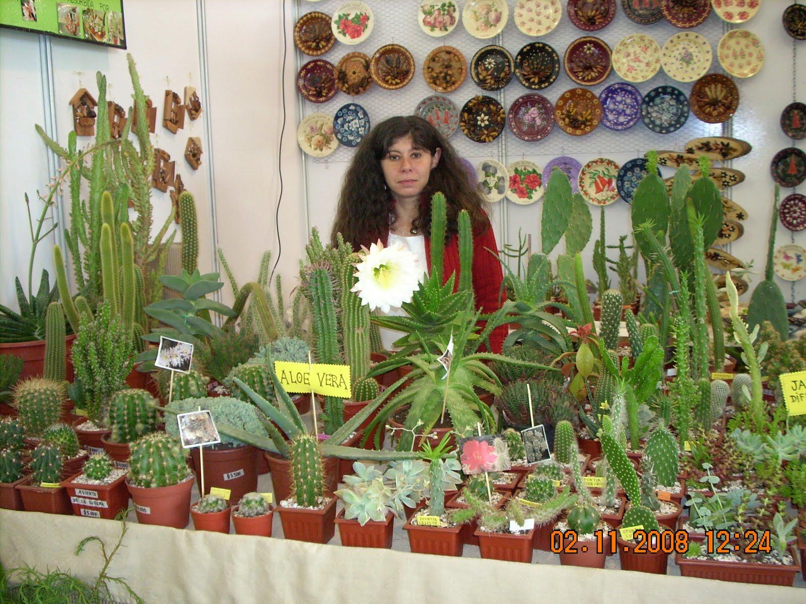 Vivero sanssouci feria expo primavera for Viveros en temuco