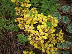 Floración de plantas suculentas