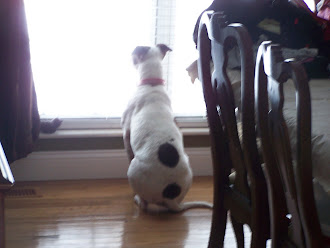 waiting for mommy to get home.