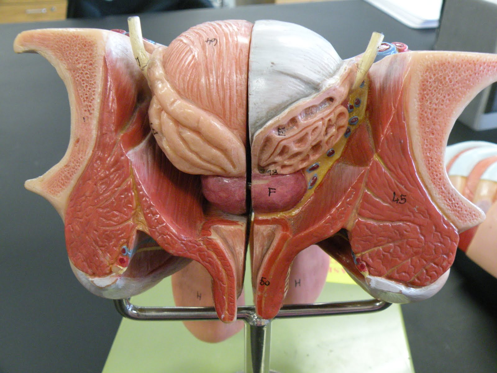 anatomy and physiology the female reproductive Learning objectives define the terms listed identify the female external  reproductive organs explain the structure of the bony pelvis explain the  functions and.