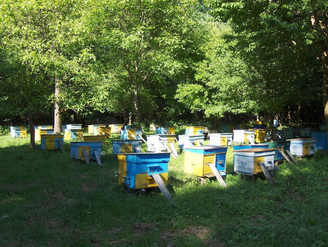 Beehives outside of Ternopil (Western Ukraine)