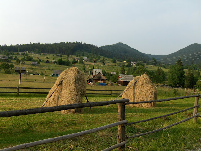 Hay Bales Done Manually Carpathian Mountains West Ukraine
