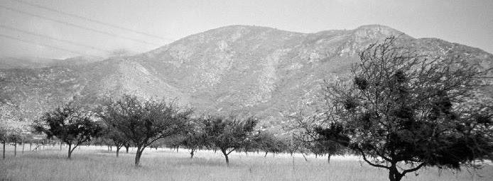 Paisaje Xerófito: Diseño en Zonas Áridas