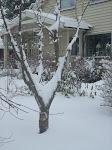 januar 2009 i min hage