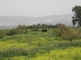 שדות ירוקים בעין אפק