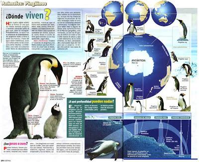 Preguntas frecuentes sobre los pingüinos